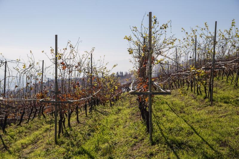 ワインだけではなく、ブドウ栽培から知っていただきたい