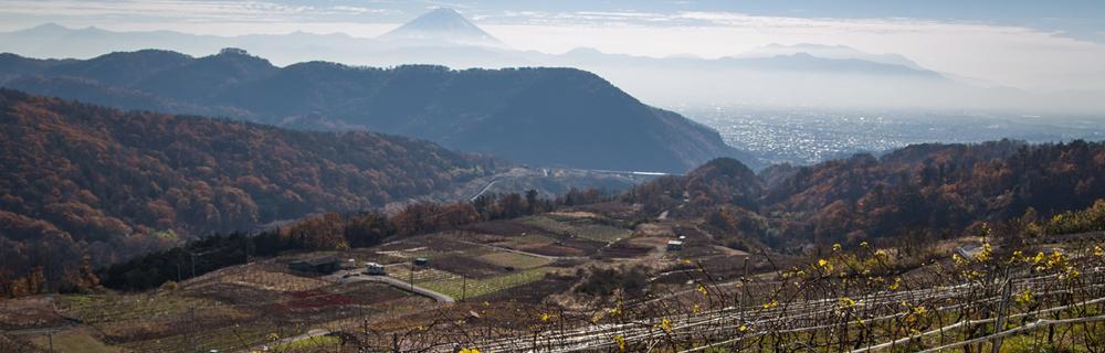 自社農場生産葡萄だけを使用したこだわりのワイン『敷島醸造』