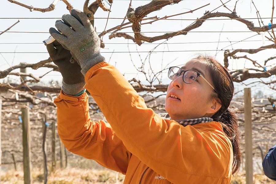「ぶどう栽培は、スマートでクリエイティブな作業」と夕香里さん