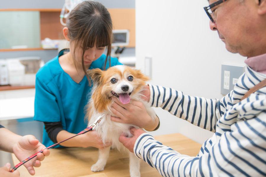 安心して治療が受けられるよう、できるだけ、飼い主さんの 目の前で処置しています。